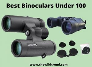 10 Best Binoculars Under $100 in 2020 – Buyer's Guide