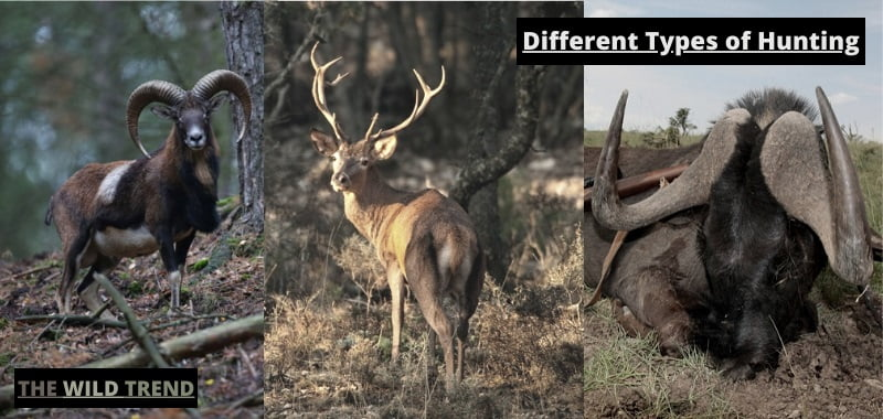 Types of Hunting