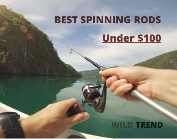 Best Spinning Rods Under $100 Reviews