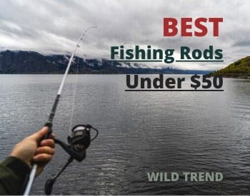 Fishing Rod under 50 ( Reviews)