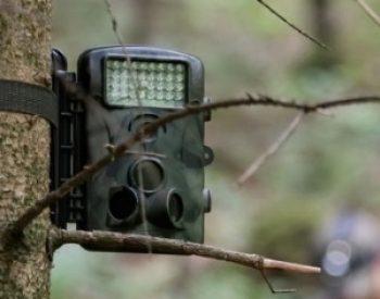 10 Best Trail Cameras Under $50 in 2021